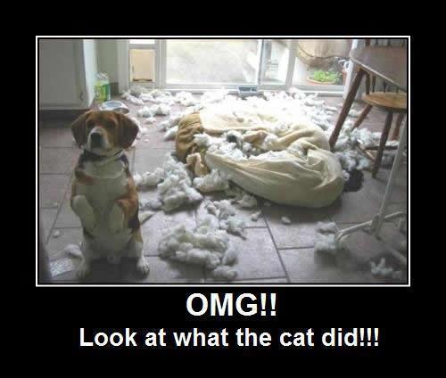 tgif funny animals - photo #24