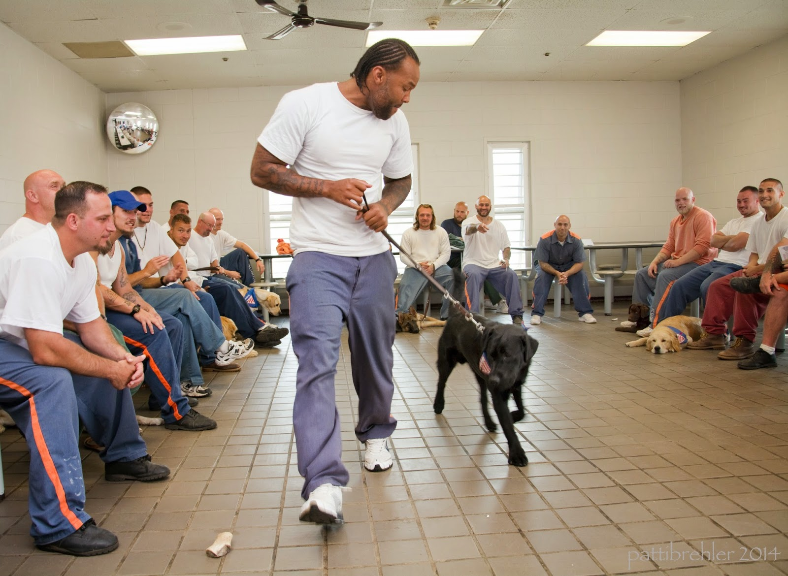 An african american wearing prison blue pants and a white t-shirt is walking toward the camera with a leash in his hands, looking down to a young black lab at his side. There are men sitting all around three sides of the room behind the man and dog.