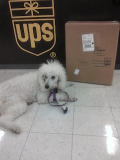Dog laying next to box