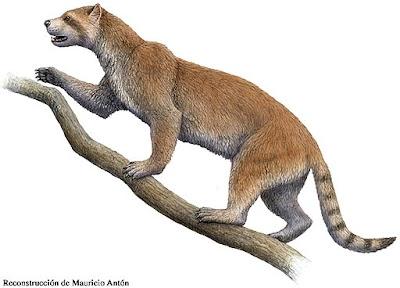 Ailuridae fosil Simocyon