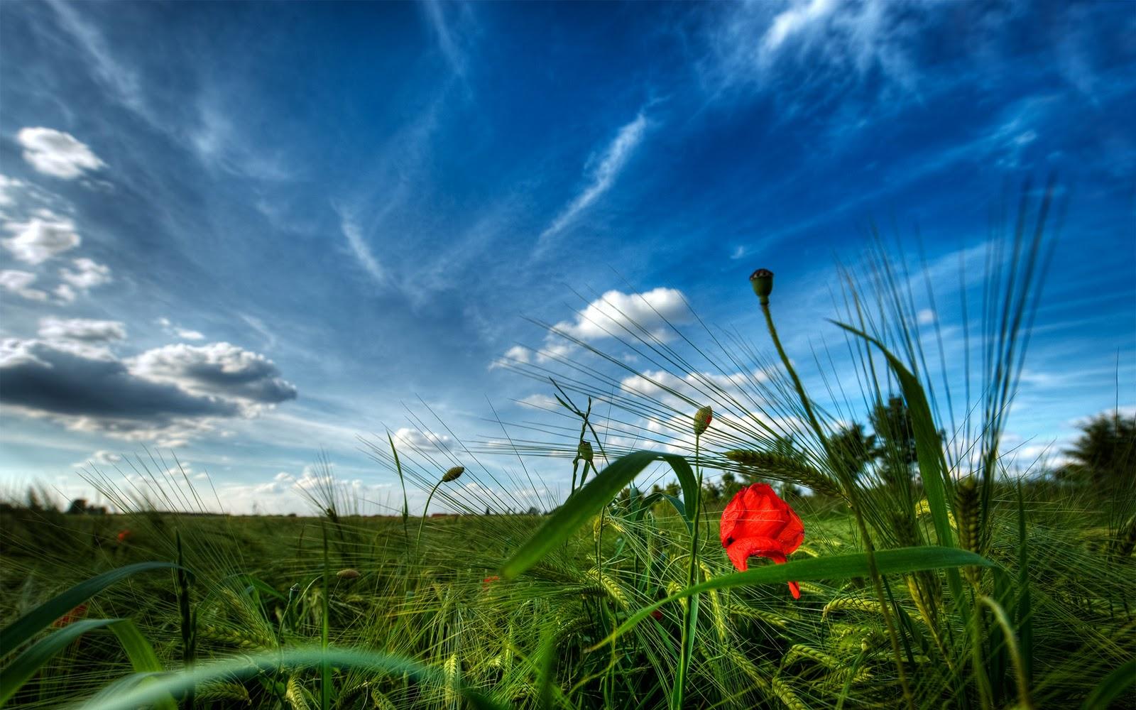 http://2.bp.blogspot.com/-3OofKKir75w/TzLKKAB645I/AAAAAAAAAKQ/2TEPDan-yYo/s1600/Flower+Field+Nature+HD+Wallpaper+-+FreeHDWall.Blogspot.Com.jpg