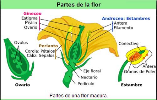 Reproduccion sexual en las plantas concepto