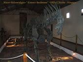 Dinosaurio - Villa El chocon