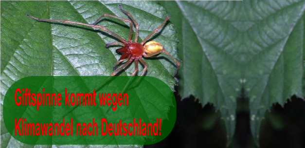 Arachnophobikergegenklimawandel