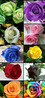 10 Color Rose Seed Colorful Total 200 Seeds For Your Lover HOT