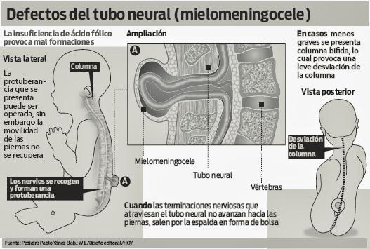 El acido folico en el cuerpo de una embarazada.