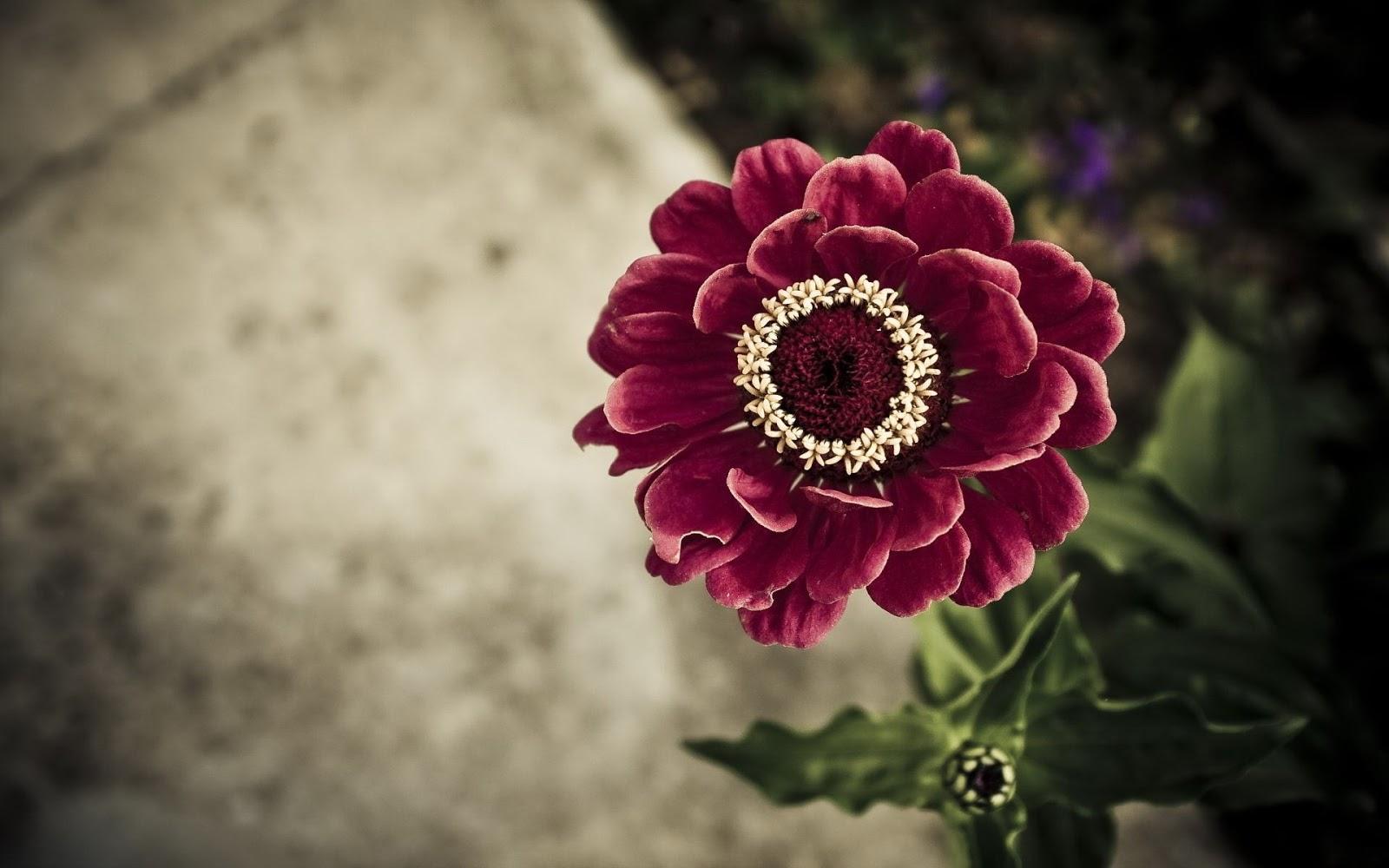 ver imagenes de paisajes naturales, en alta resolución  - Fotos De Flores Alta Resolucion
