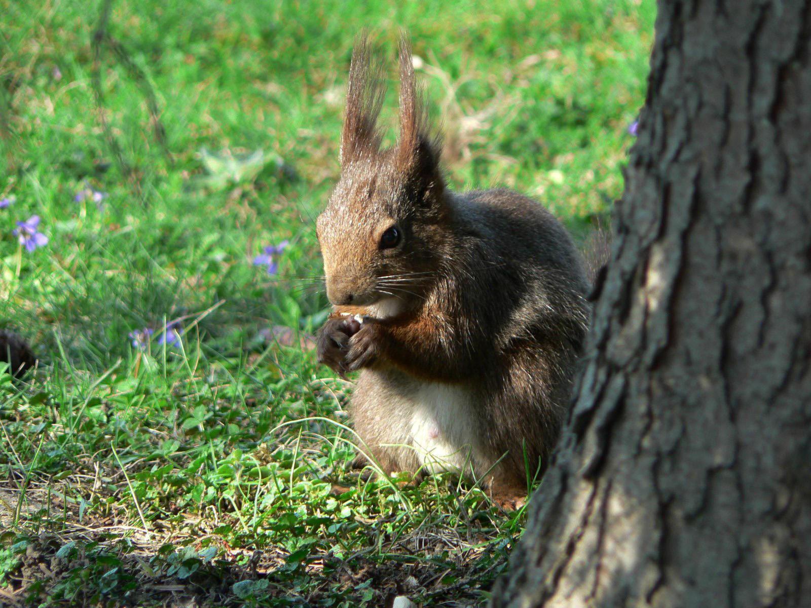 Beautiful animals - photo#15