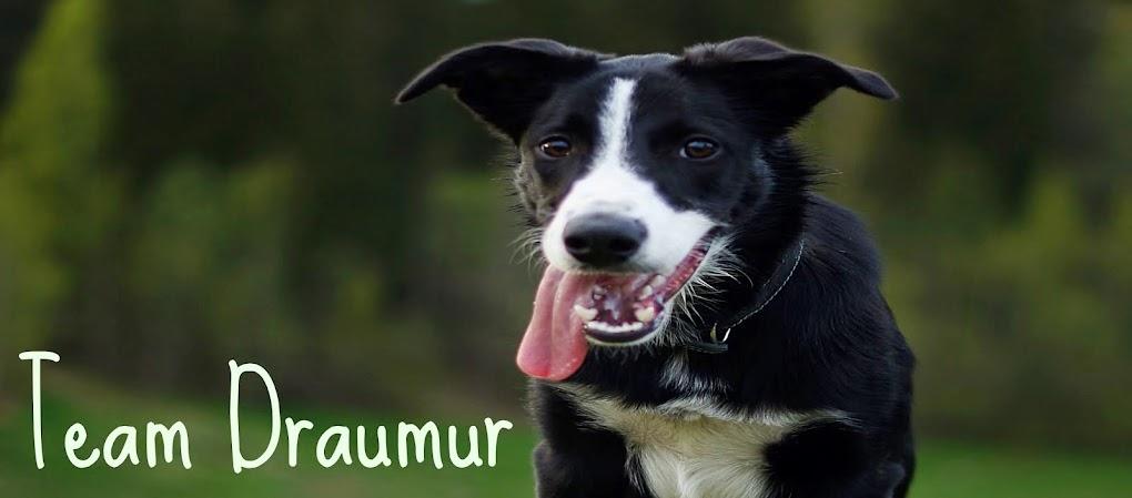 Team Draumur