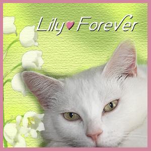 R.I.P. Lily