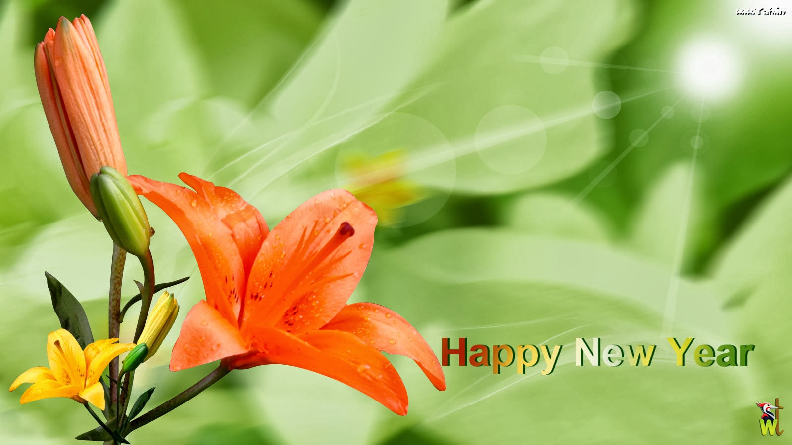 Happy new year flowers gifts wishes wallpapers