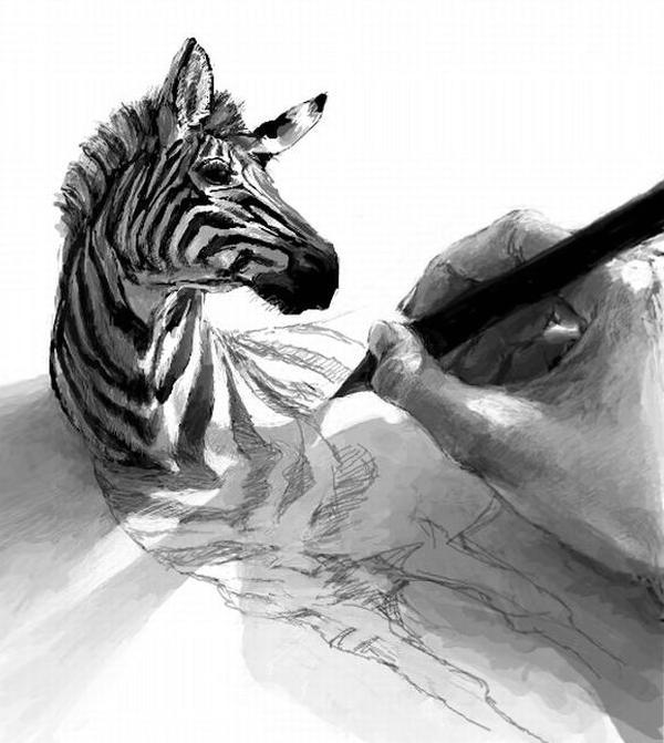 Dibujando una Zebra