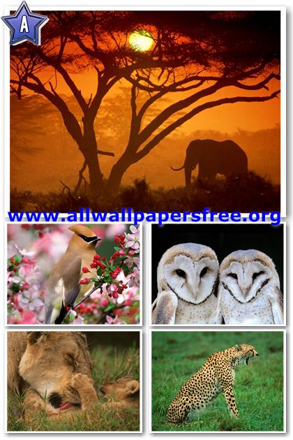 60 Amazing Animals Wallpapers 1280 X 1024 [Set 29]