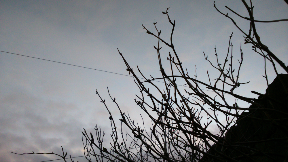 Silhouetted branches against a dusky sky
