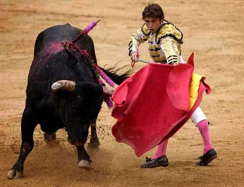 Bull attacking matador with red cloth