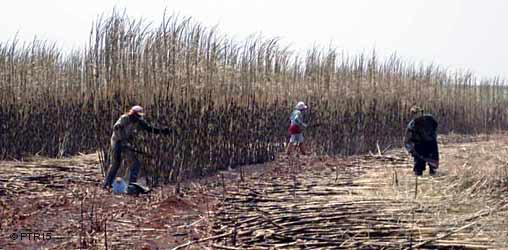 Governo brasileiro regista número recorde de empresas a explorar mão-de-obra escrava