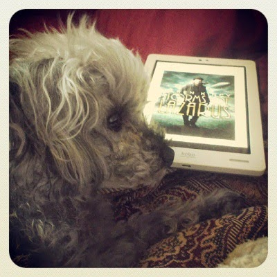 A fuzzy grey poodle, Murchie, appears in profile before a white e-reader with the cover art for Storms of Lazarus displayed on its screen. The cover depicts a pale-skinned man with short, dark hair and a raven perched on his shoulder. He wears a long, dark coat. An airship is visible in the air behind him. The e-reader is laid flat, so the image appears at an angle.