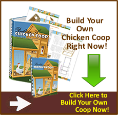 http://impartialreviews.org/go/chickencoop/