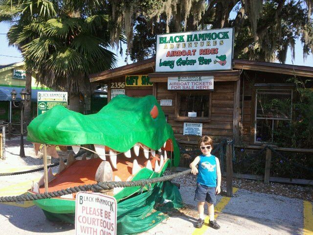 these were taken at black hammock adventures air boat rides on lake jesup which boasts to have the most alligators     swamp tour   last of florida vacation pics   jaime haney fine art  rh   jaimehaney