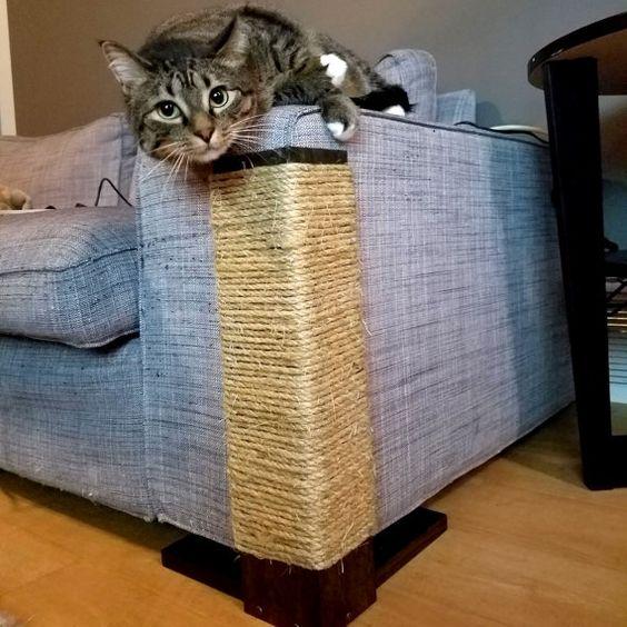 Ideias Para Proteger Seu Sof 225 Dos Gatos 2 Enjoy