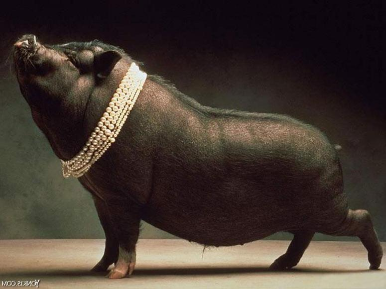 [Imagem: porco2.JPG]