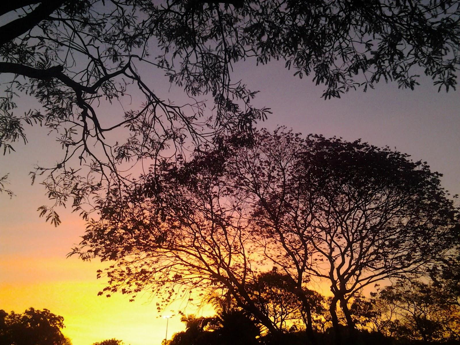 Foto tirada no Ibirapuera