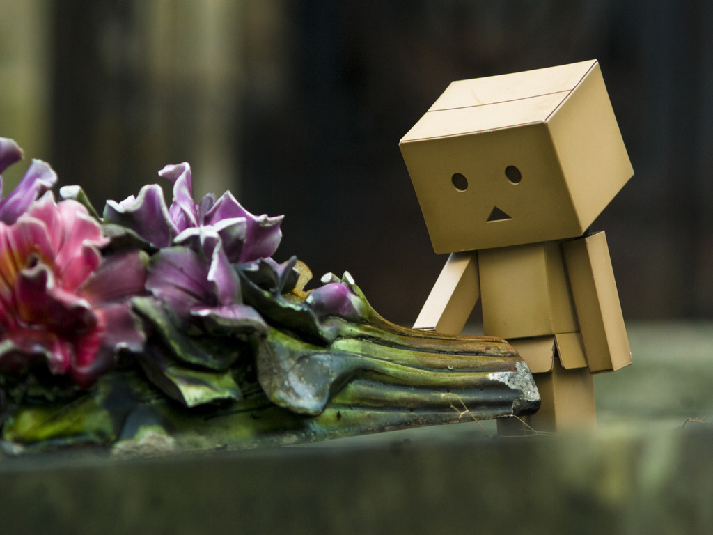 http://2.bp.blogspot.com/-3SBh4nTTOYY/T202S1Kf5sI/AAAAAAAAAI0/jDTnoAPDJcY/s1600/Flowers_with_Danbo_Wallpaper_7b0qe.jpg