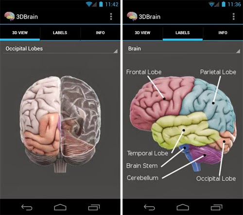 brain anatomy 3d android