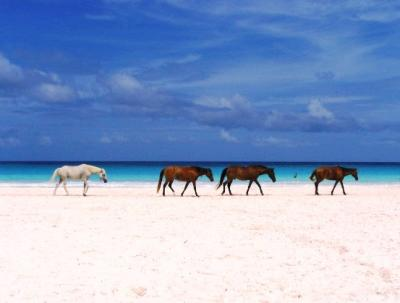 World visits harbour island bahamas beautiful scenery for Pink sands beach in harbour islands