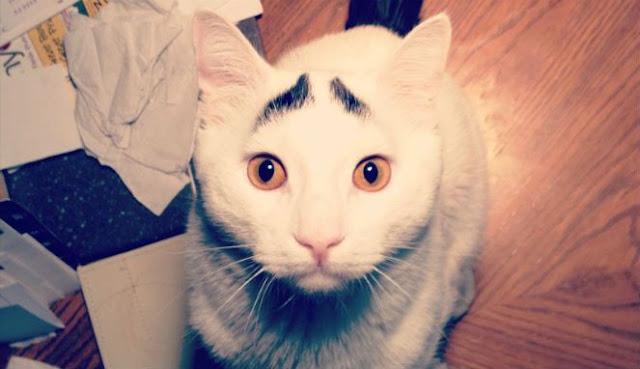 Kenapa Rasulullah Sangat Sayang Terhadap Kucing?
