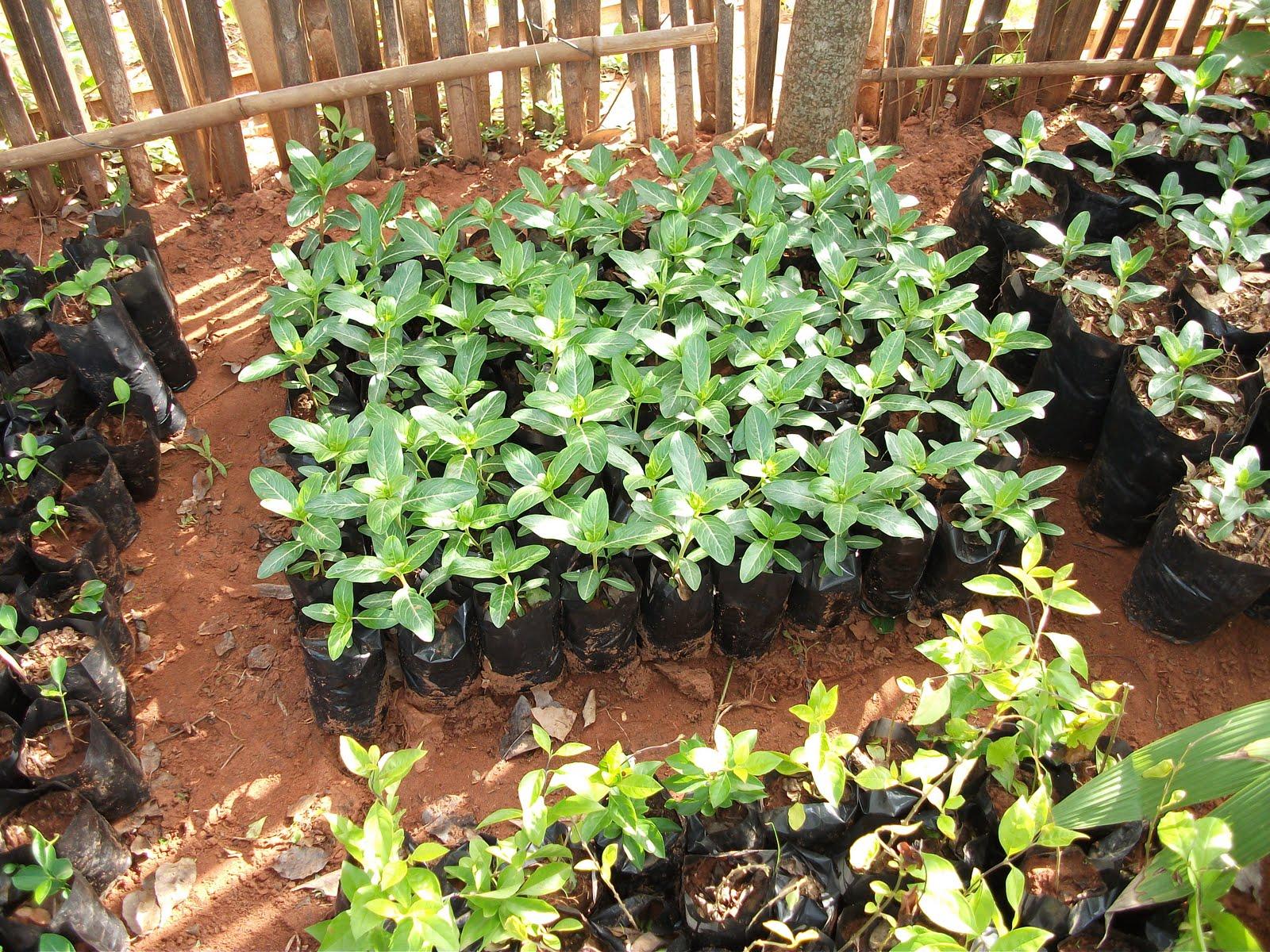 As es mi colegio proyecto el rbol da vida for Proyecto productivo de vivero forestal