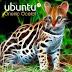 Ubuntu 11.10 Codename Oneiric Ocelot