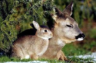 El cuento de Bambi