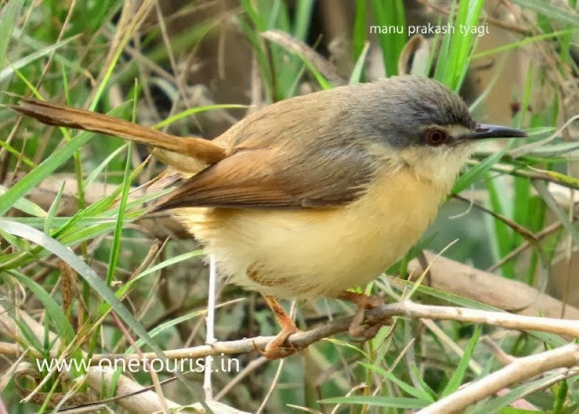 A small bird , छोटी चिडिया