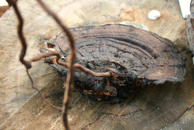 Champignons comprendre pr server et trouver les champignons comestibles - Application pour reconnaitre les champignons ...