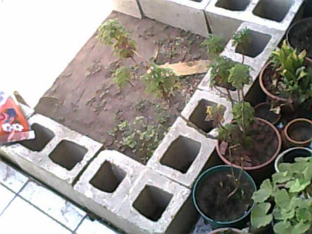 El Blog de la Familia Natural Hoy comienzo mi huerto en jardinera