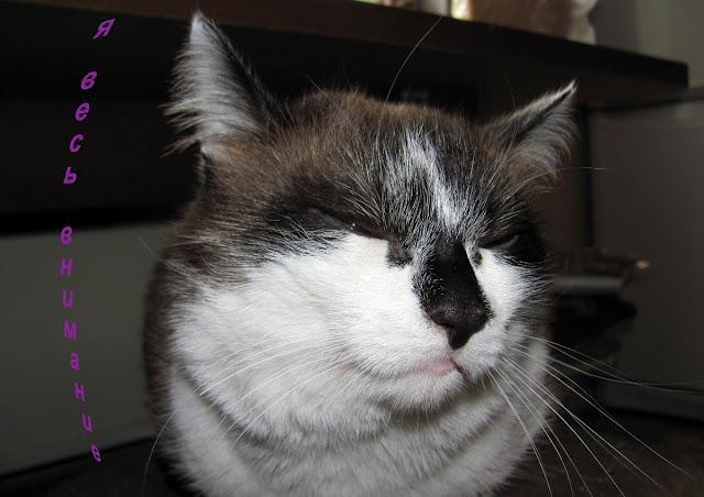 Кот Фунтик весь во внимании