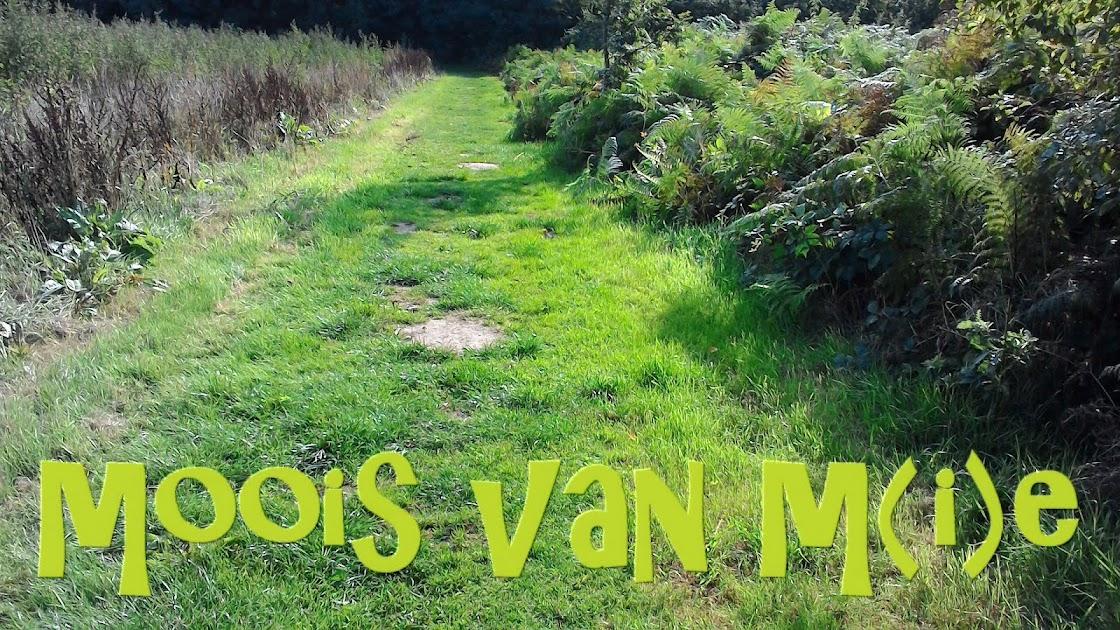 Moois van ' M(i)e'