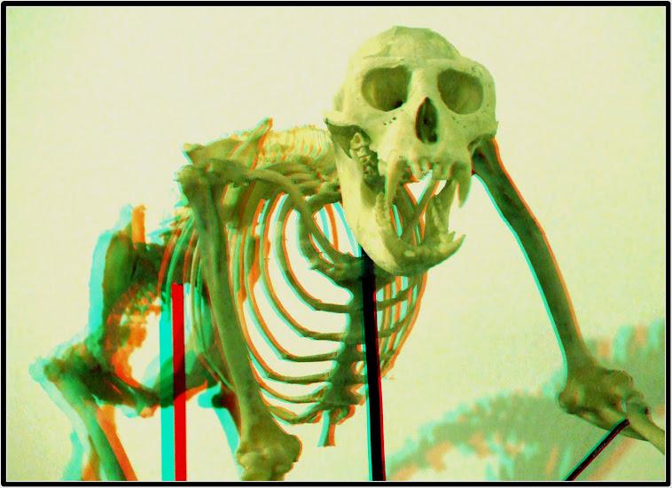 Skelet majmuna