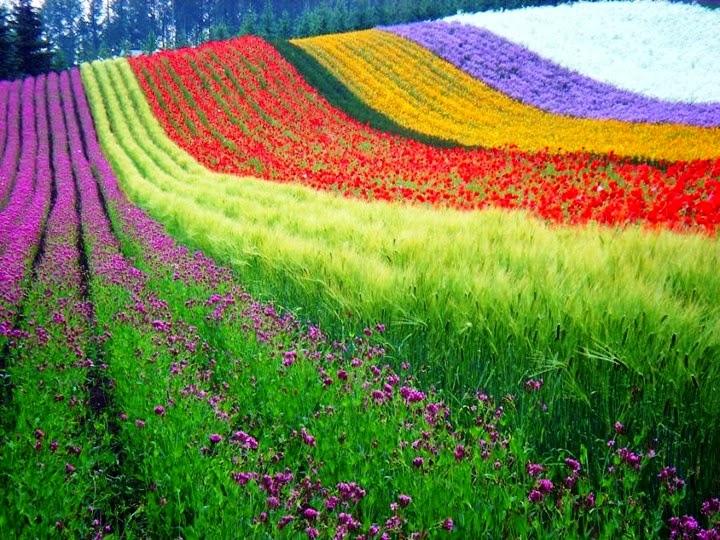 Wallpaper Beautiful And Amazing Natural HD Wallpapers 2015