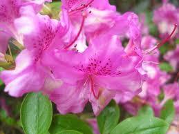 May Flowers, Flowers in Season May