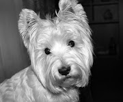 Pancho, el perro más bonito del mundo.