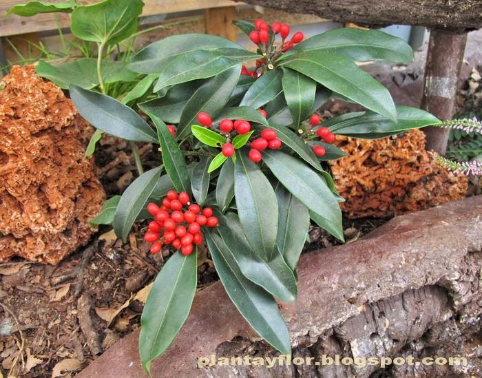 Plantas y flores plantas para el fr o - Plantas que aguantan temperaturas extremas ...