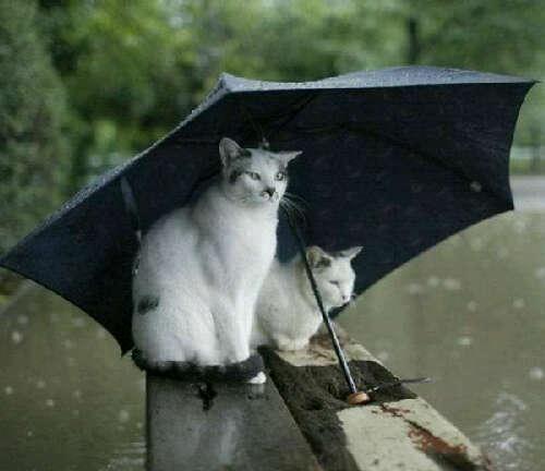 Foto Romantis Hewan Kucing