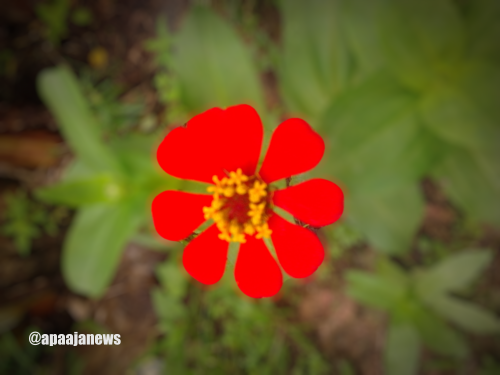 Red_Flower_Bokeh_Effect