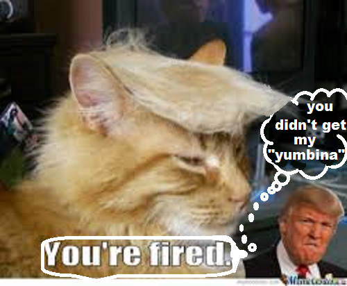you´re fired