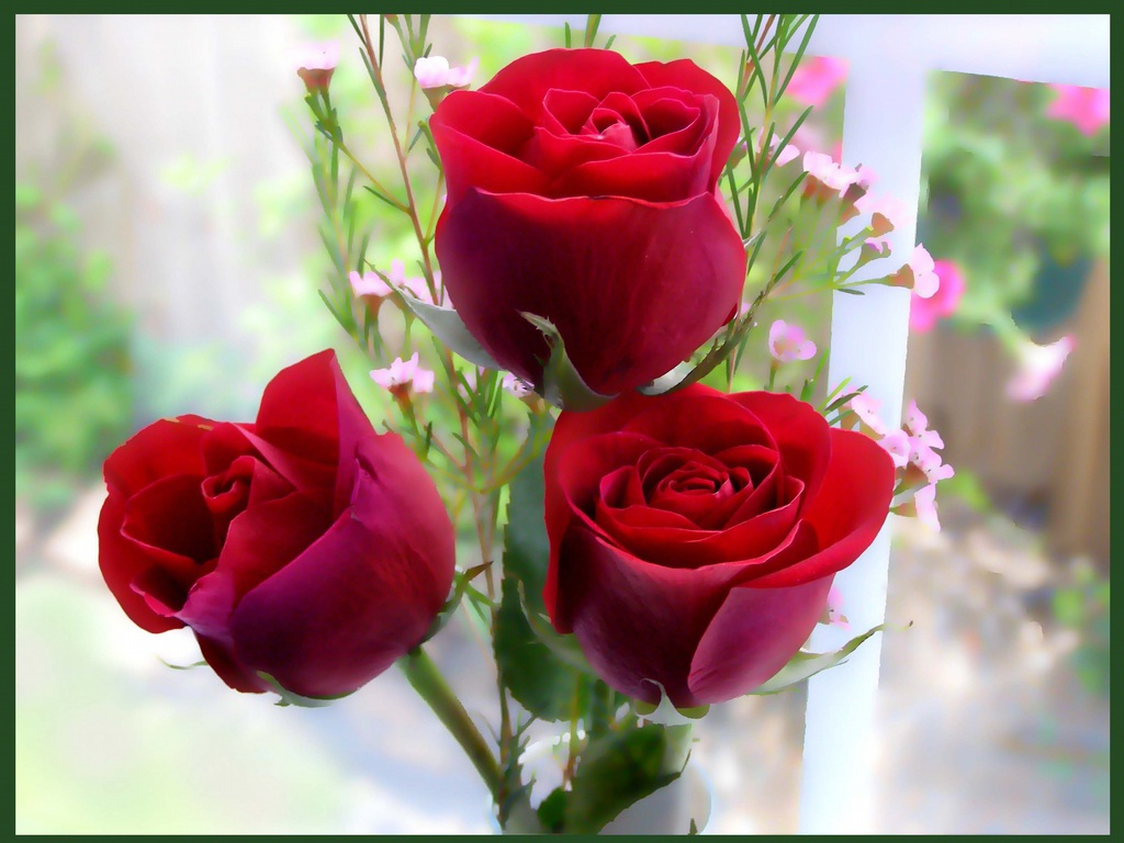 Hd wallpaper khubsurat - 90 Wedding Red Rose Flower Wallpapers Love Roses Pictures Urdu Meaning Pictures Hindi Tips Islam Books Information