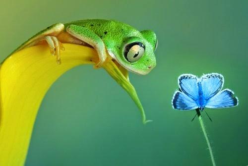 01-Wil-Mijer-Frog-Macro-Photography-www-designstack-co