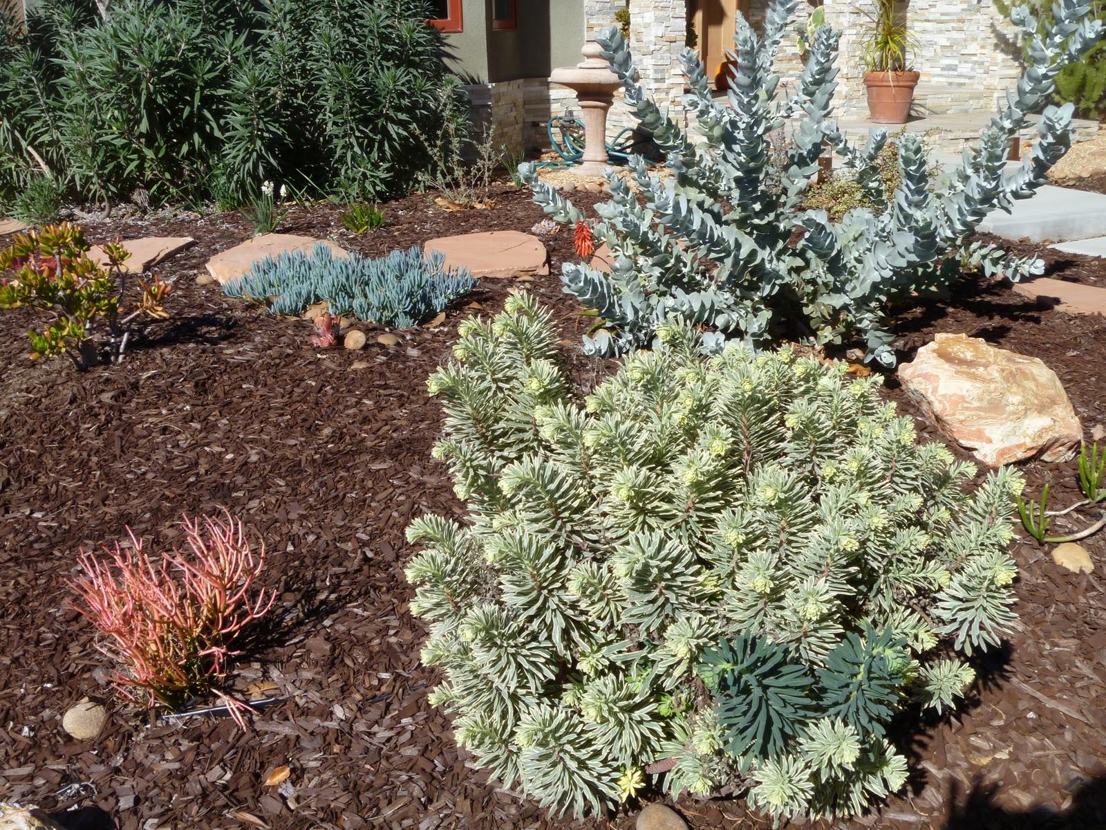 mar vista green garden showcase 11349 victoria avenue
