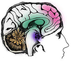 5 Manfaat Olahraga Bagi Otak